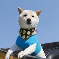 MOON Eyeball Doggy Bib