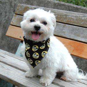 Photo3: MOON Eyeball Doggy Bib