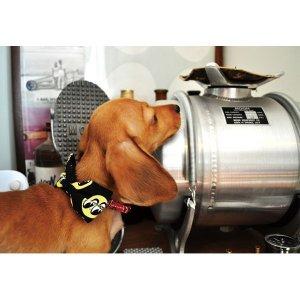 Photo2: MOON Puppy Ribbon