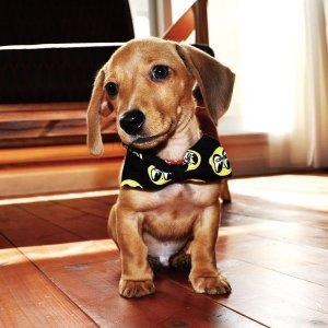 Photo1: MOON Puppy Ribbon