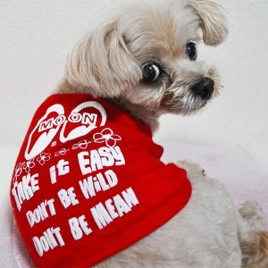 Photo2: Take it Easy Doggie T-shirt
